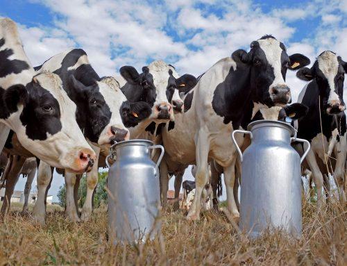 Ministarstvo poljoprivrede otvorilo je novo savjetovanje Programa državne potpore za iznimno osjetljive sektore