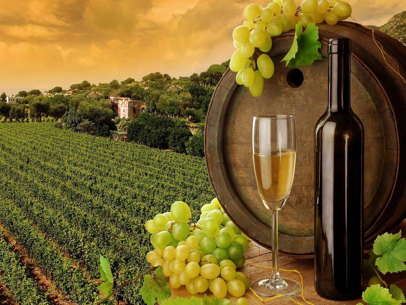 Vinska omotnica - natječaj i bespovratna sredstva za vinogradare