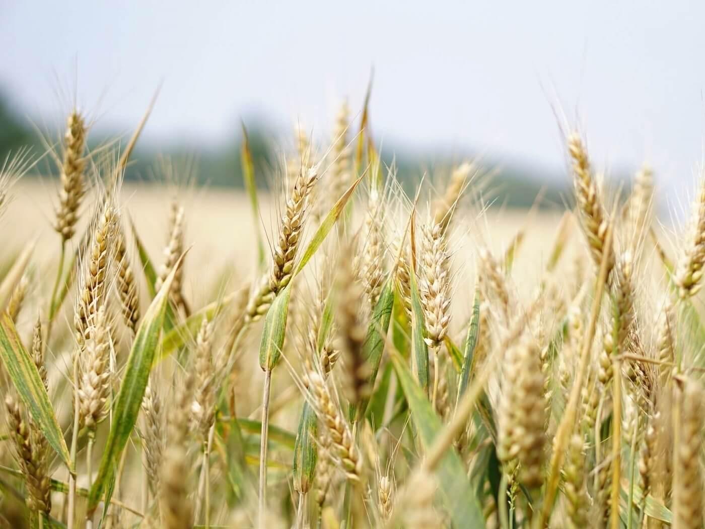10.2. Potpora za očuvanje, održivo korištenje i razvoj genetskih izvora u poljoprivredi