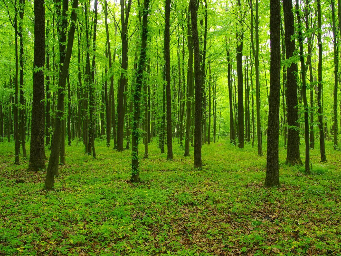 4.3.3 Ulaganje u šumsku infrastrukturu